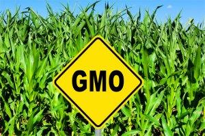 GMO-Crops