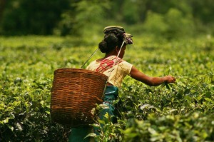 teaworker